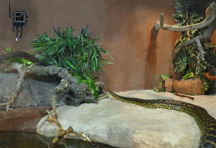 Anaconda en el Acuario de Zaragoza
