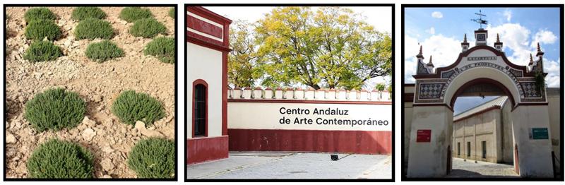 Jardín, entrada al Centro Andaluz de Arte Contemporáneo y entrada a la antigua Fábrica de Cerámica situada en el Monasterio de la Cartuja de Sevilla que forman parte del proyecto Patrimonio Urbano, nuevas tecnologías y educación como caso aplicado de docencia con realidad aumentada.