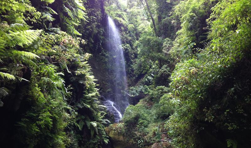 El proyecto de isla inteligente permitirá a la red de parques naturales de La Palma disponer de un sistema de alertas para prevenir situaciones que pongan en peligro su riqueza natural.