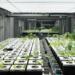 Francia desarrolla un proyecto de agricultura urbana digital que utiliza análisis de datos y Realidad Virtual