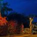 Iluminación LED inteligente que facilita la observación de las estrellas en la ciudad tinerfeña de Puerto de la Cruz