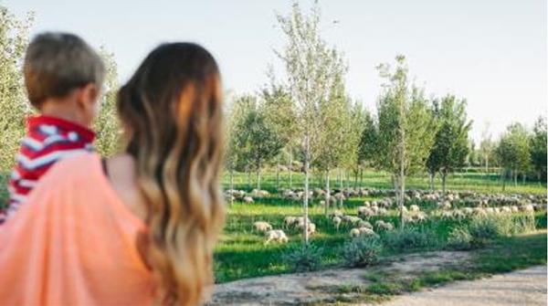 Figura 2. Pastoreo en la zona de soto y silvestre (4 veces al año viene un rebaño de ovejas a desbrozar).