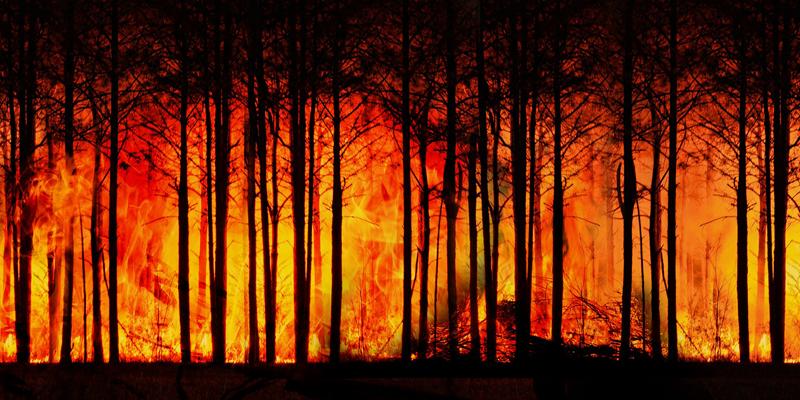 Bosque ardiendo. El modelo de predicción se basa en la teledetección por satélite e incorpora, entre los datos que tiene en cuenta, los modelos de biomasa.