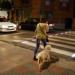 Pasos de cebra inteligentes para prevenir atropellos en la ciudad sevillana de Tomares