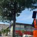 El municipio valenciano de Paterna inicia su plan para geoposicionar los árboles de la ciudad