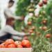 'Huerta Próxima' ayudará a los agricultores a comercializar sus productos online
