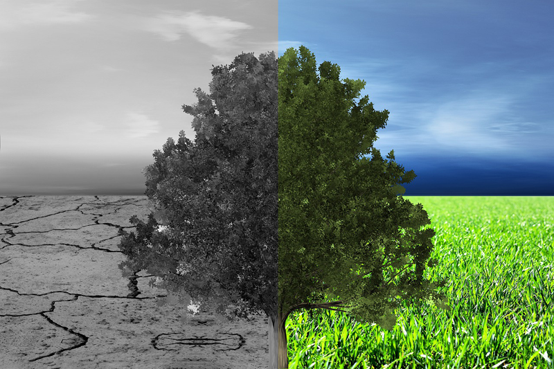 transición ecológica y medio ambiente