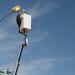 Los municipios de Alcantarilla y Gozón digitalizan su alumbrado con una solución NB-IoT