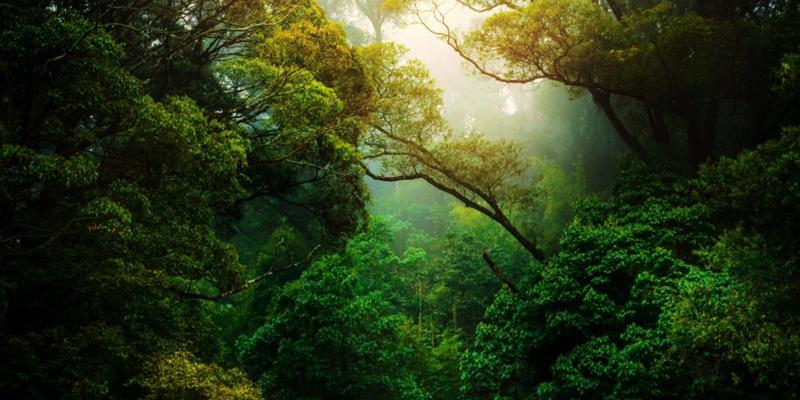Formación online gratuita para mejorar la sostenibilidad en los municipios rurales y parques nacionales