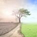 Acuerdo sobre la Ley del Clima de la UE para alcanzar la neutralidad climática en 2050