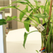 El proyecto europeo Watchplant busca convertir las plantas en sensores ambientales